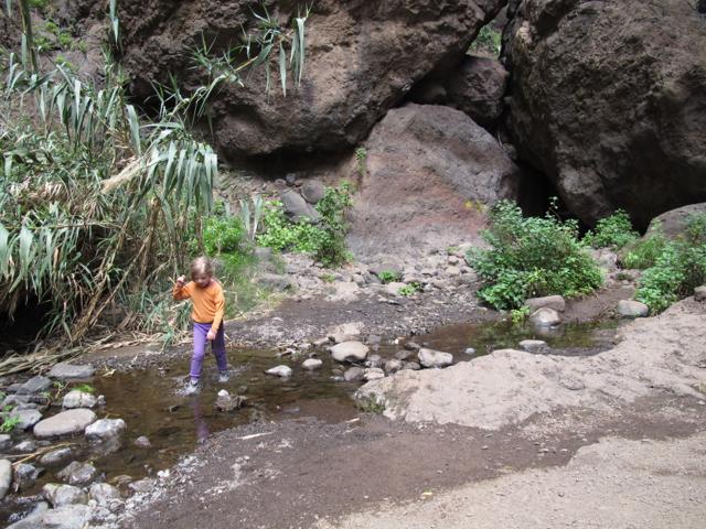 Phoenix canariensis Tenerife Masca Hiking
