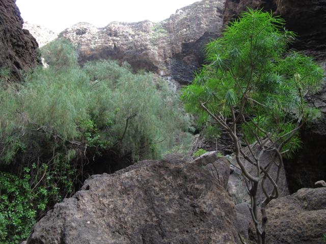 Tenerife Masca Hiking