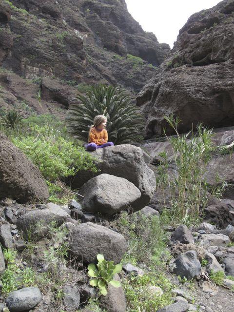Tenerife Phoenix canariensis