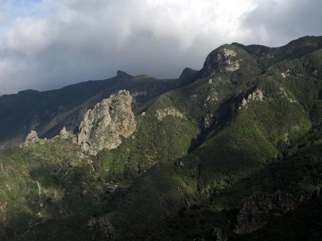 Laurisilva Tenerife