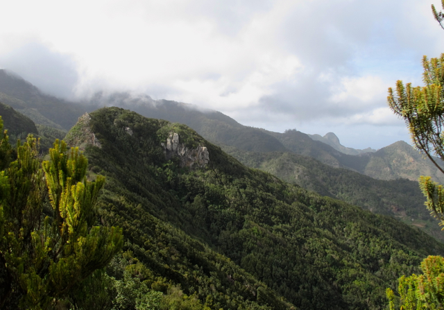 eisentrauti Anaga Tenerife