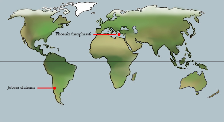 Distribution World Map, Jubaea chilensis & Phoenix theophrasti